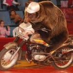 медведь на мотоцыкле