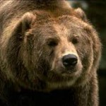 Медвежий аппетит