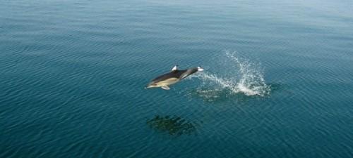 Достоинства отдыха на Черном море (1)