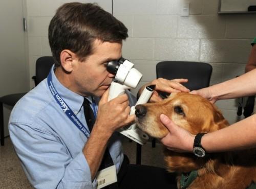 Любишь животных – стань ветеринаром (1)