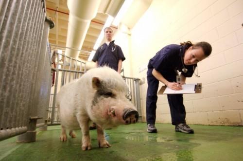 Выбор профессии с любовью к животным  (1)