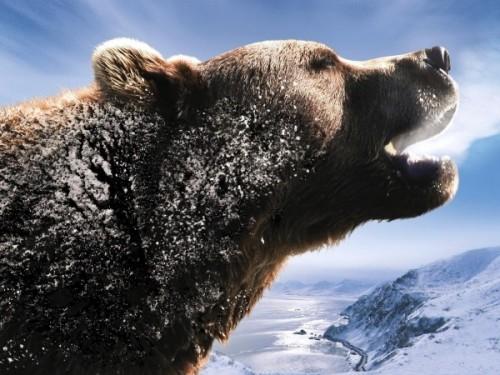 Бурый медведь 4