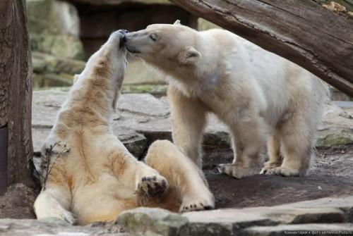 Как перевоплотиться в медведя? 1