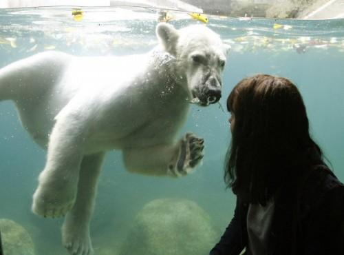 Школьные поездки в зоопарки1