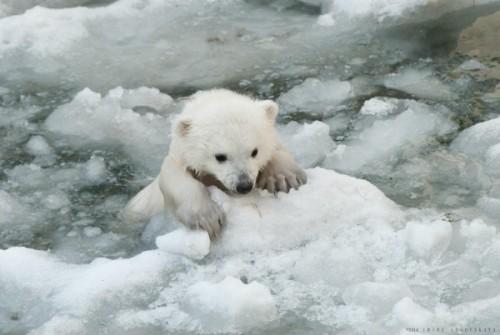 Знакомим детей с медведями3