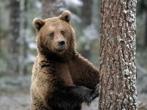 Медвежий быт.3