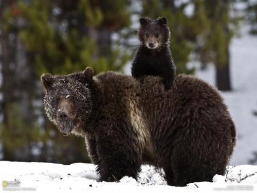 Может ли медведь считаться родственником человека?