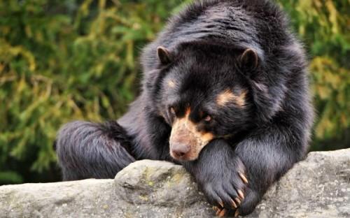 Может ли медведь считаться родственником человека?3