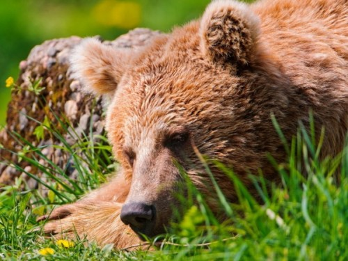 Обитание, питание и привычки медведей