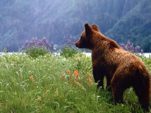 Питание содержащихся в неволе бурых медведей3