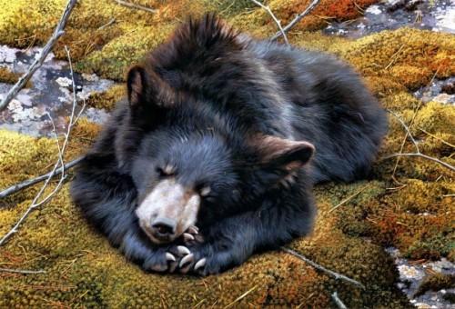 Уникальные особенности современных диких медведей1