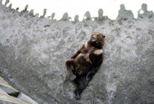 медведи в зоопарках зимой 2