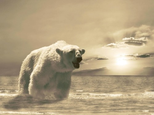 Жизнь Белого медведя1