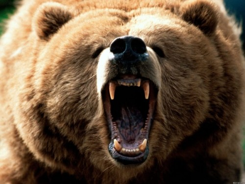 Особенности лечения зубов у медведей2