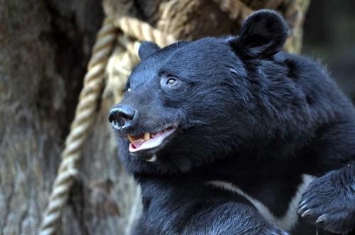 Чем питаются медведи планеты Земля.3