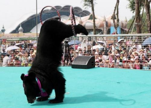 Интересные факты о черных медведях3
