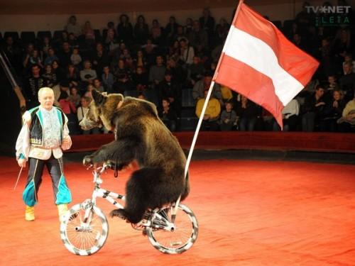Мифы и правда о цирковых медведях