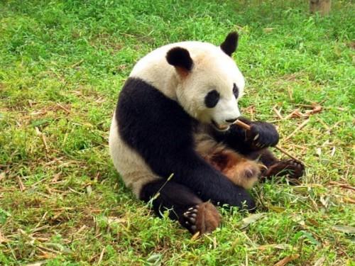 Медведь: виды и среда обитания3