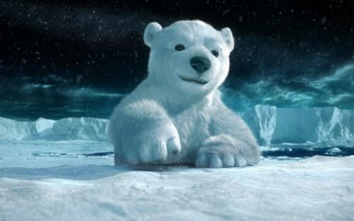Медведи белые, обитание2