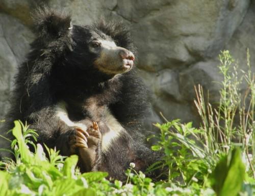 Медведь губач3