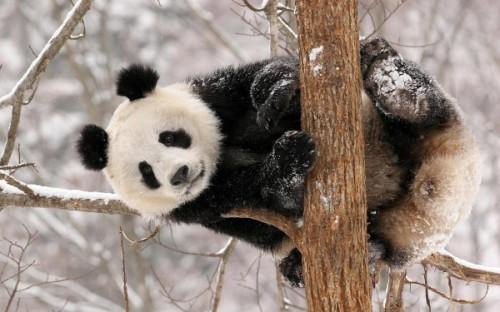 Место проживания панд. 3