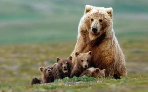медведи любят мёд 2