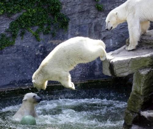 Содержание медведей в неволе
