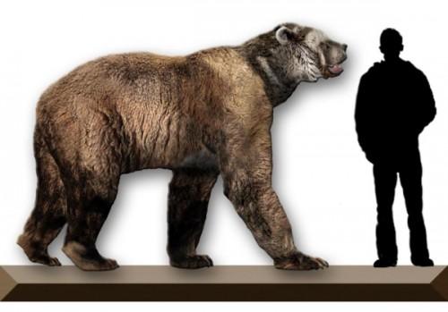 Вымерший вид медведей