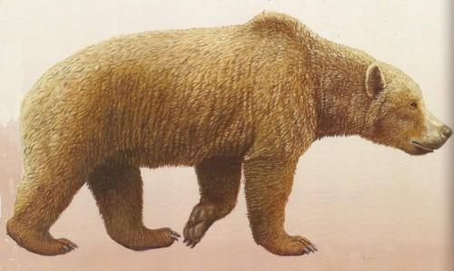 Вымерший вид медведей3