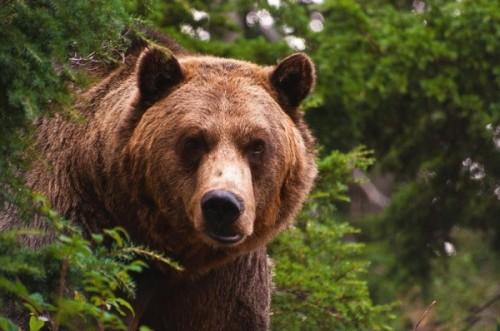 Действия при встрече с медведем 2
