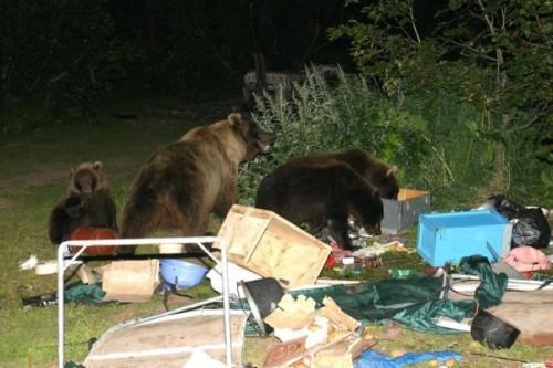 Действия при встрече с медведем