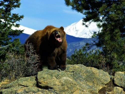 при встрече с медведем 3