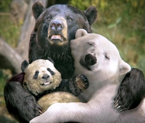 Медведи в Подмосковье 1