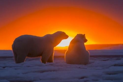 Медведи, кто они?2