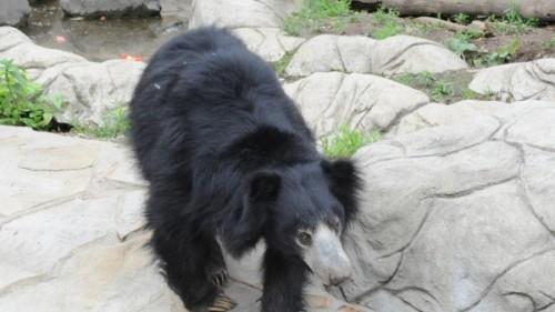 Медведь-губач2