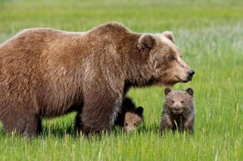 Медведь – один из символов России для иностранцев