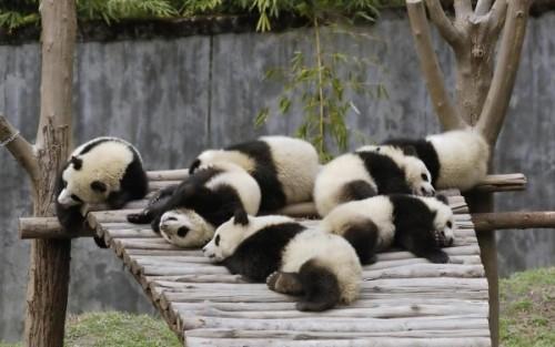 Как живётся медведям?3