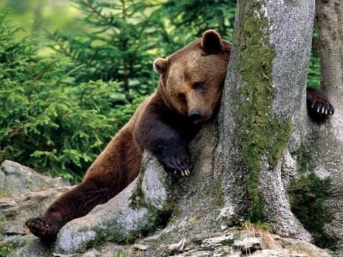 медведь в спячке 3