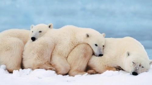 медведь в спячке 4