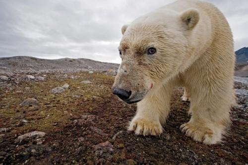 С медведями по жизни 1